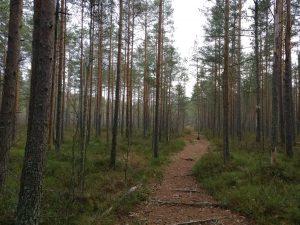 Polku METSÄÄN