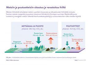 Infograafi metsien hiilinielusta