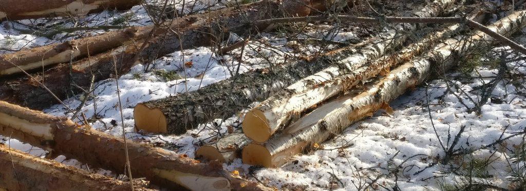 Onko nyt hyvä aika myydä puuta.