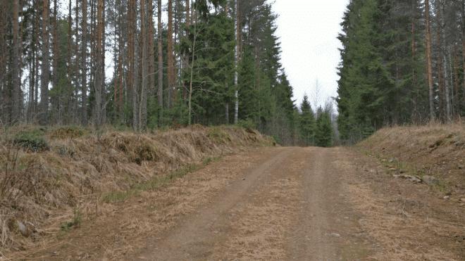 Hyväkuntoinen metsätie on etu hakkuita suunniteltaessa.
