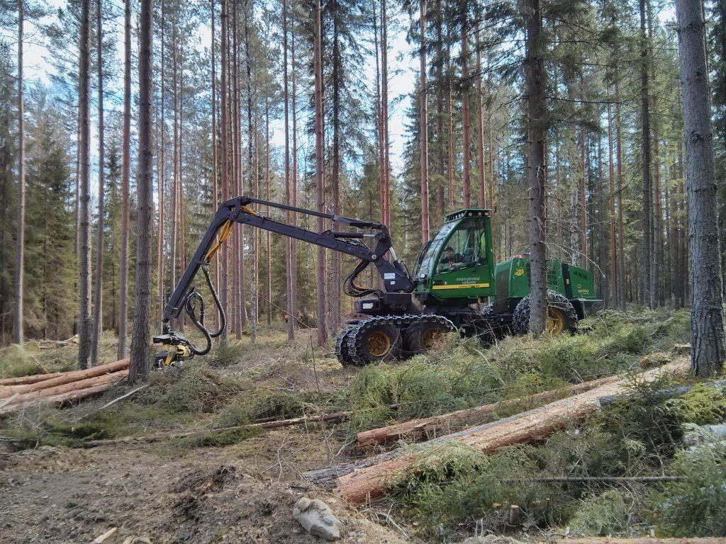 Metsäkone eli moto metsässä tekemässä hakkuuta