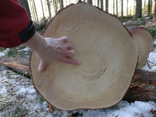 Vaaksalla puun halkaisijan arviointi