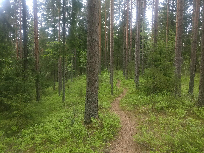 Hyvillä varusteilla on mukava kulkea metsässä