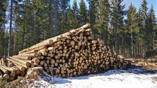 Kuitupuukasa metsävarastolla eli laanilla