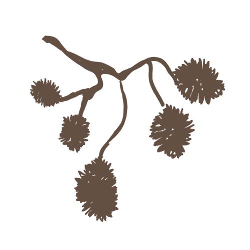 Suomalaisia puutuotteita ja metsän antimia.