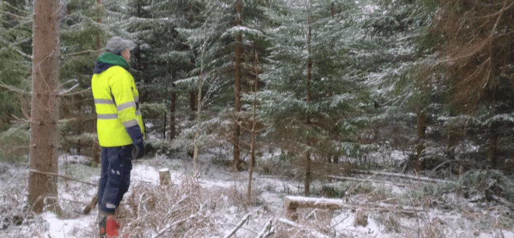 Mitähän tuolle metsälle pitäisi tehdä?