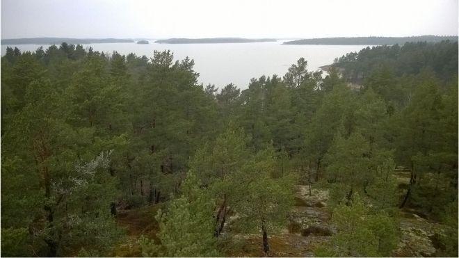 Metsät vaikuttavat ilmastonmuutokseen.