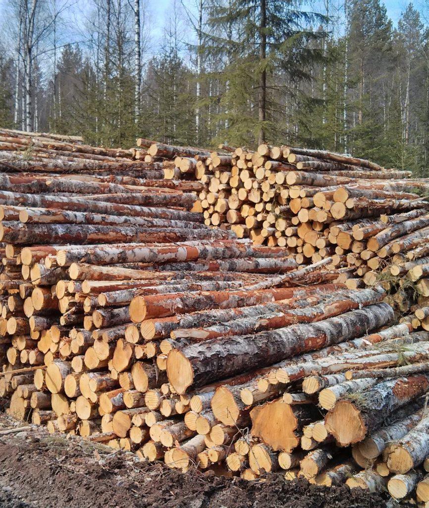 puupinot onnistuneiden puukauppojen jälkeen