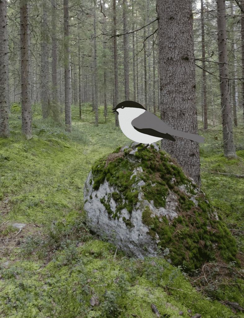 Untuvikko metsänomistaja pohtii vaihtoehtoja metsäasioissa