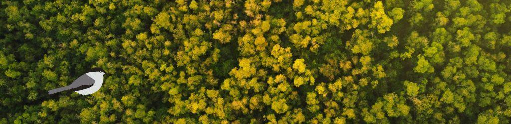 Yläbannerikuvassa Hömppä katseleen metsää.