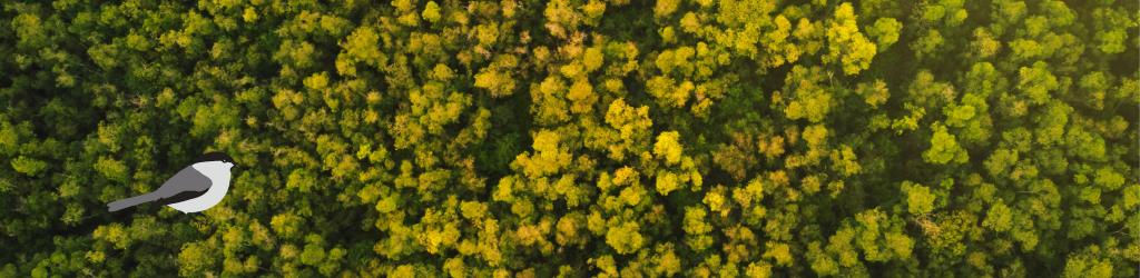 Untuvikko metsänomistaja tarvitsee perehdytystä metsäalan sanastoon ja asioihin.