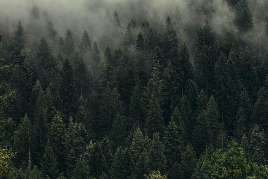 Hyvinkasvava metsä on hyvä hiilinielu