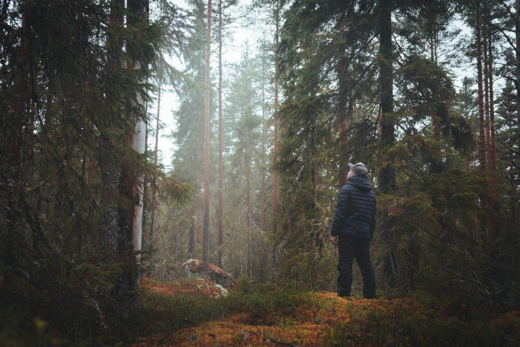 Metsänomistaja ihmettelemässä metsässä