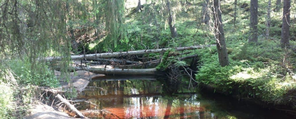 kirkasvetinen suojeltava puro