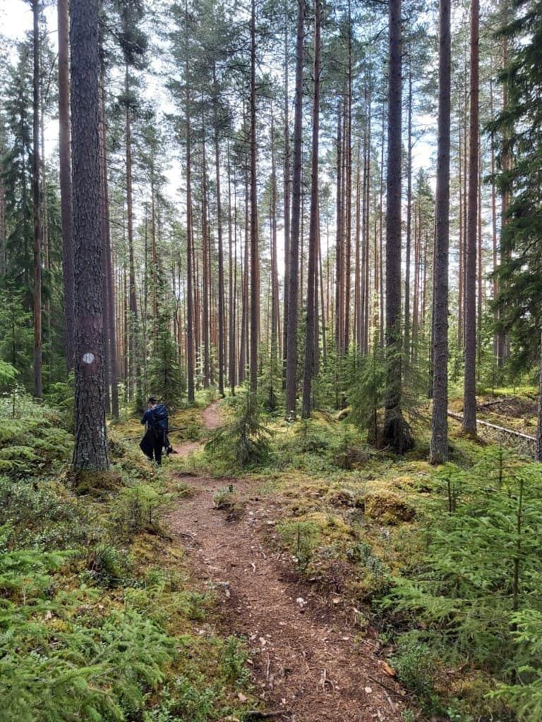 Metsäpolut virkistyskäyttöä varten